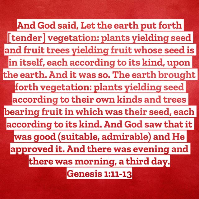Genesis 1:11-13