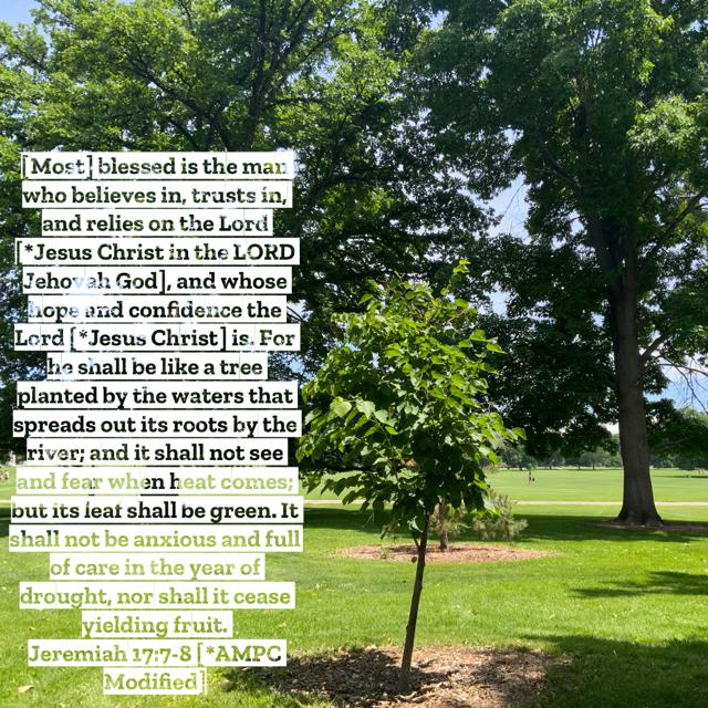 Jeremiah-17:7-8