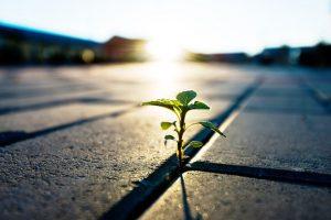 growing-in-adversity