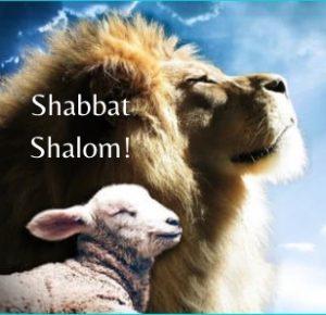 lion-lamb-shabbat-shalom-28-final